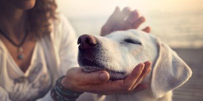 Level 1 REIKI Certification for Humans and Animals