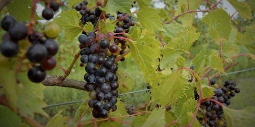 Junto Wine Harvest Celebration Dinner