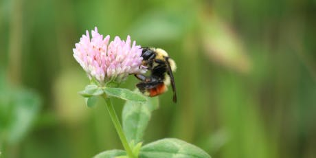 Alberta Native Bee Council - 2019 Annual General Meeting tickets