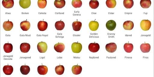 Apple Variety Showcase