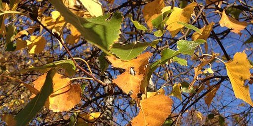 Autumn leaf sculpture-making