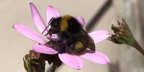 Beginners Guide to Bumblebees tickets