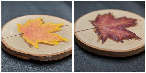 Painted Tree/Leaf Ornaments or Coasters