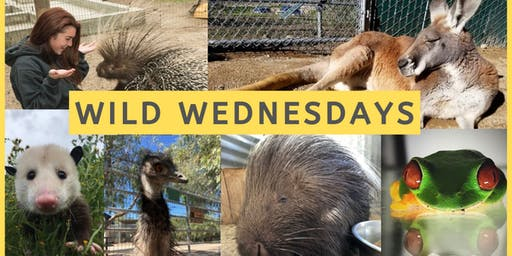 Wild Wednesdays @ Animal Tracks