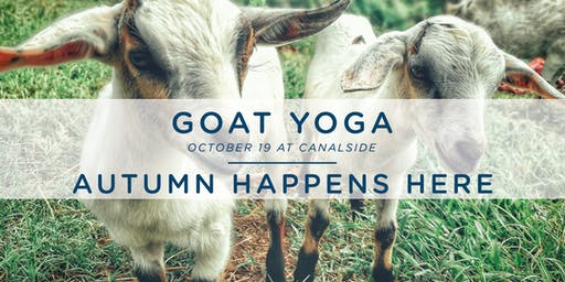 Autumn Happens Here: Goat Yoga