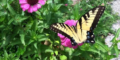 Butterfly Gardening   Thursday, February 27th - 2:00 pm   tickets
