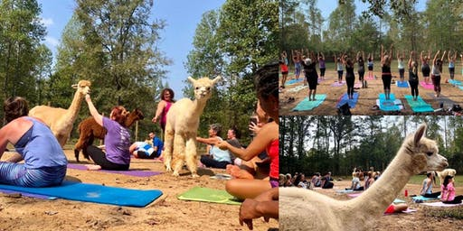 Alpaca Haven Yoga