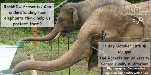 RockEDU Presents: Can understanding how elephants think help us protect them?