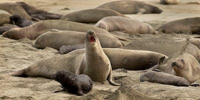 Sky, Land, Sea and Elephant Seals at Chimney Rock