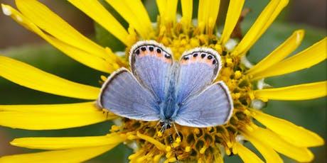 Butterflies for Beginners tickets