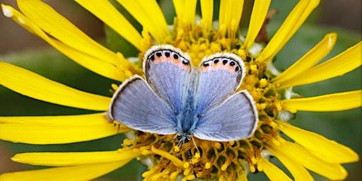 Butterflies for Beginners