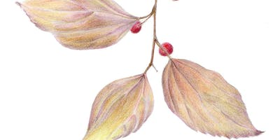 Winter Color: Branches, Leaves and Winter Fruit - Colored Pencil Techniques workshop with Nina Antze