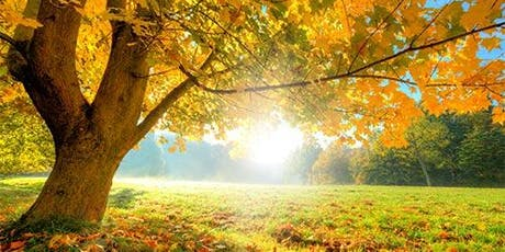Fall Colours Sunrise Series - Forest Therapy Walks tickets