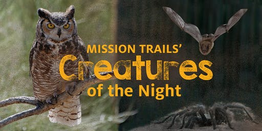 Family Program: Mission Trails' Creatures of the Night