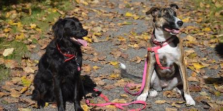 Dog Walking Club tickets