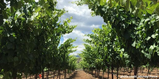 'Growing Season in Review' Workshop for Arizona Winegrape Growers