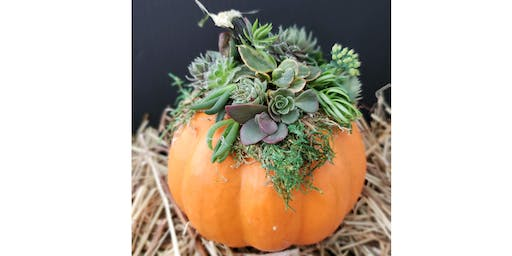 Mini Succulent Pumpkin Workshop