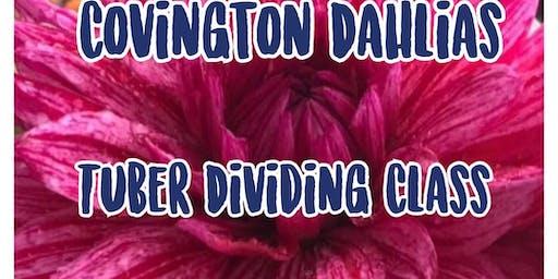 Dahlia Tuber Dividing Class