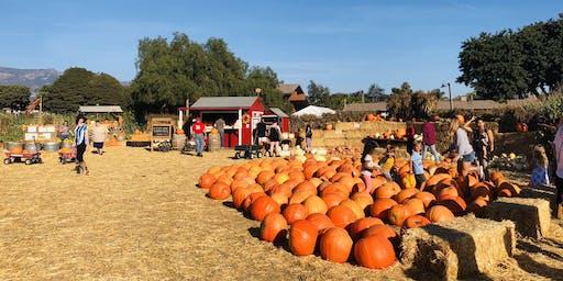 Pumpkin Patch Corn Maze trip