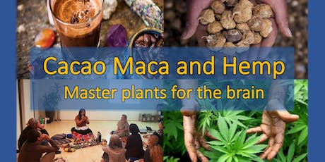 Cacao, hemp and maca - The master plants for our brain tickets