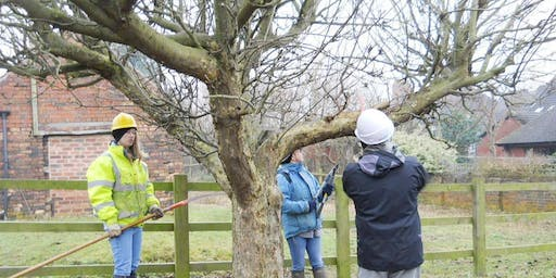 FREE Fruit tree pruning course
