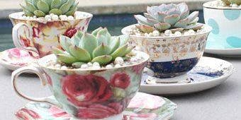 Sip and Succulent Tea Party Sunday