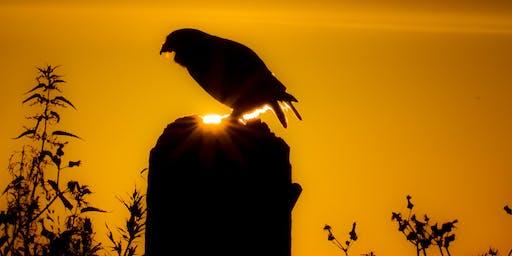 Owl Prowl on Lawrence Weston Moor