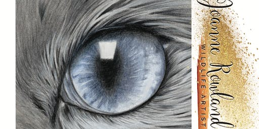 Beginners Coloured Pencil Workshop #1 - Blue Cats Eye