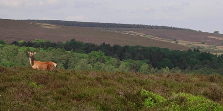 Volunteer Work Day: Blacka Moor Nature Reserve tickets