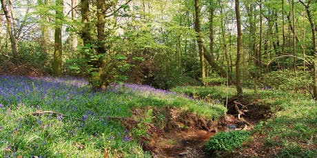 Volunteer Work Day: Moss Valley Woodlands Nature Reserve tickets