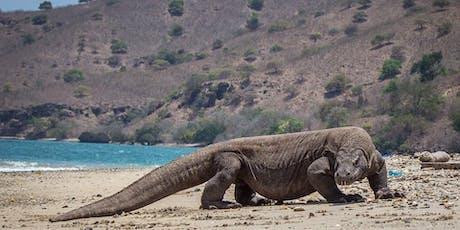 6D5N Komodo Island+Pink Beach+Manta Point+Wae Rebo Village tickets