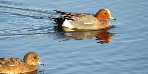 World Wetlands Day: winter wildfowl at RSPB Minsmere