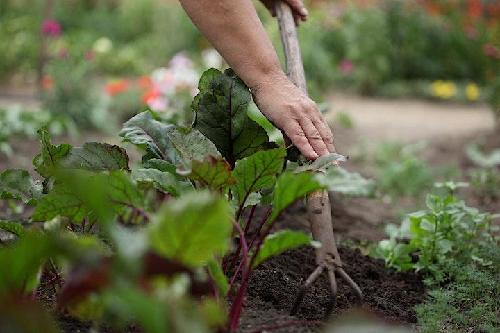 Imagen de Curso de Agricultura Urbana: autoconsumo y alimentación natural