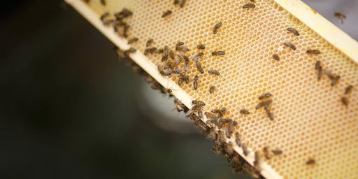 Animation ruches et miel