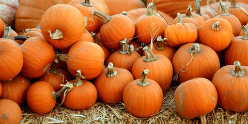 Owen Mortgage Team Pumpkin Patch