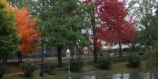 Montreal Native Trees Walk series/  Randonnées d'Arbres indigènes de Montréal