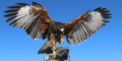 Copy of Day with Colorado Raptors and Nature's Educators