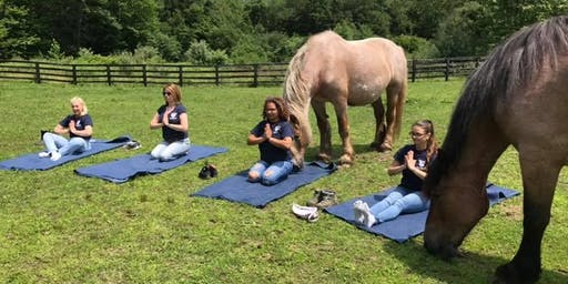 Yoga with the Horses