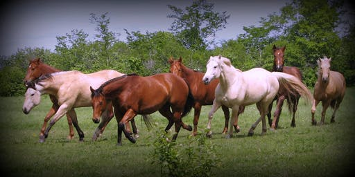 """True Grit Academy"" -  Open Facility - Russ Krachun Kozak Horsemanship"