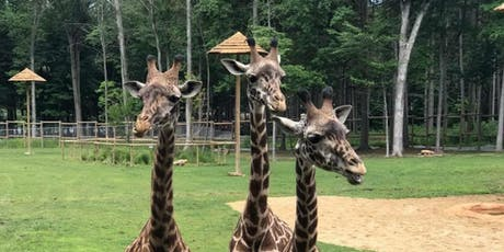 Behind the Scenes Tours at Giraffe:  November 2019 tickets