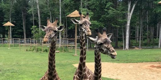 Behind the Scenes Tours at Giraffe:  November 2019