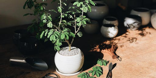 Brazilian Raintree Bonsai Workshop