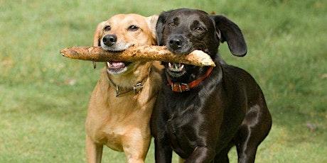 West-End Dog Meet-up! tickets