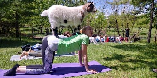 Goat Yoga!