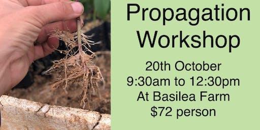Propagation Workshop at Basilea Farm