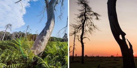 Balade et coucher de soleil avec un formateur en photographie billets