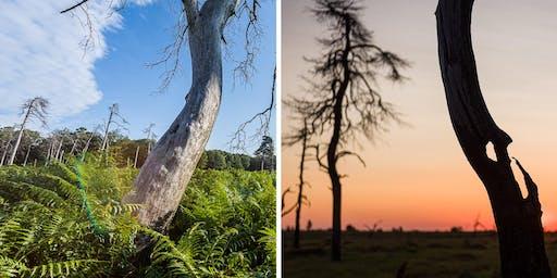 Balade et coucher de soleil avec un formateur en photographie