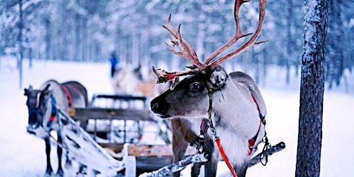 Meet the Reindeer