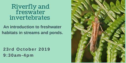 Freshwater Invertebrate Training Course