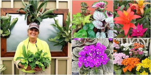 Cool New Houseplants